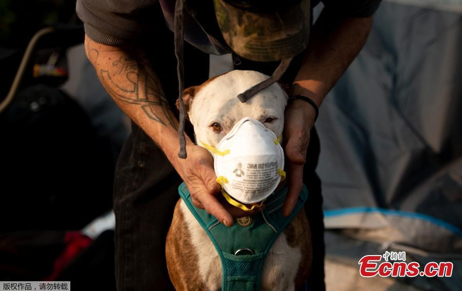 Jason House attempts to put a respirator mask on his dog Rowland at an evacuee encampment in a Walmart parking lot in Chico, California on November 17, 2018. More than 1,000 people remain listed as missing in the worst-ever wildfire to hit the US state. (Photo/Agencies)