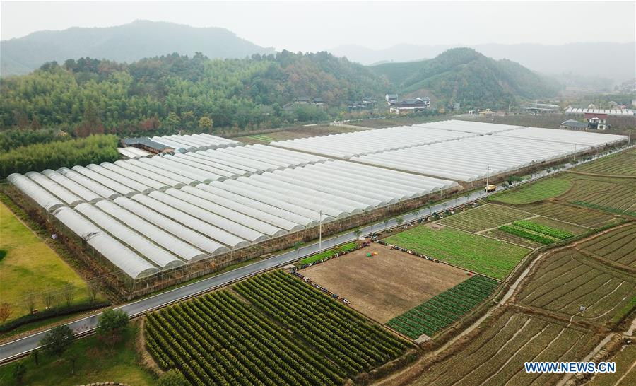 Aerial photo taken on Nov. 16, 2018 shows a farm in Lujia Village of Anji County, east China\'s Zhejiang Province. Lujia Village is located in the mountainous region in northeastern Anji. The village has a population of over 2,200 and about 533 hectares of bamboo forests. To build a beautiful village and improve the living of local villagers, Lujia implemented a comprehensive plan for rural, industrial and tourism development in recent years. The income of the village\'s collective economy surged from 18,000 yuan (about 2,500 U.S. dollars) in 2011 to 3.3 million yuan (about 475,000 U.S. dollars) in 2017. The per capita income of local people arrives at 35,000 yuan (about 5,000 U.S. dollars). So far, the village has collective assets valued at nearly 200 million yuan (about 28.8 million U.S. dollars). (Xinhua/Meng Chenguang)