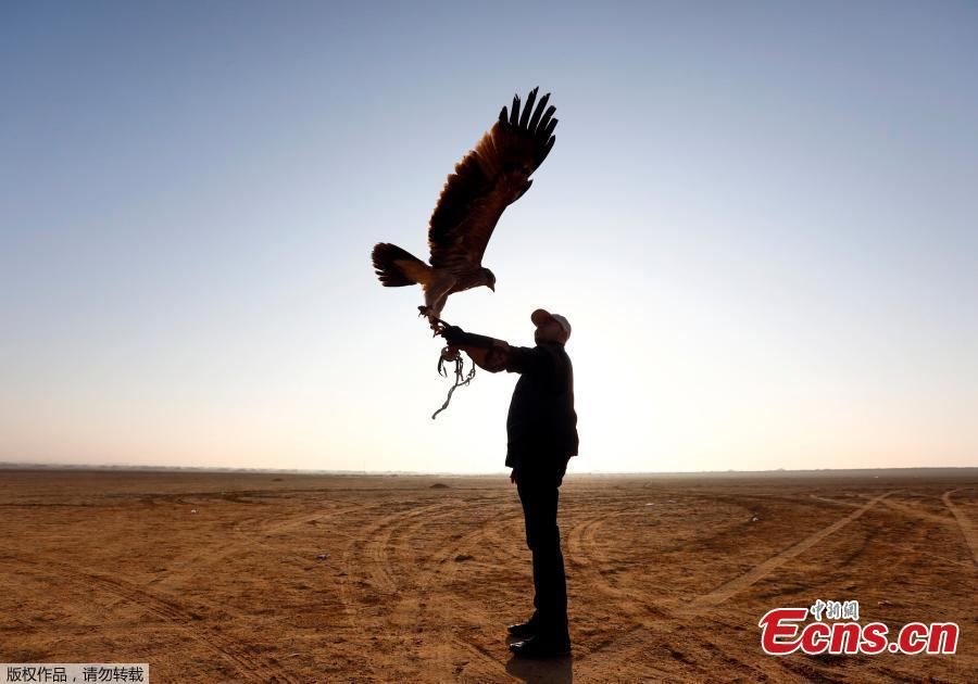 A member of EGY Falconer Club shows his falcon during a celebration on World Falconry Day at Borg al-Arab desert in Alexandria, Egypt, November 17, 2018.  (Photo/Agencies)