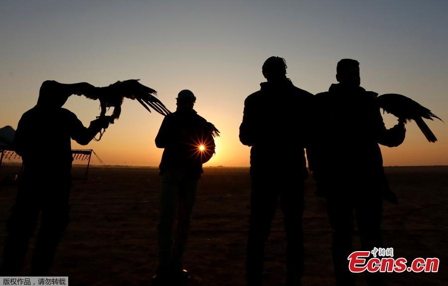 Members of Egy Falconer Club and austringers look at sunrise during a celebration on World Falconry Day at Borg al-Arab desert in Alexandria, Egypt, November 17, 2018.  (Photo/Agencies)