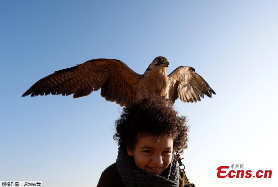 Ammar, 11, a member of EGY Falconer Club plays with his falcon \