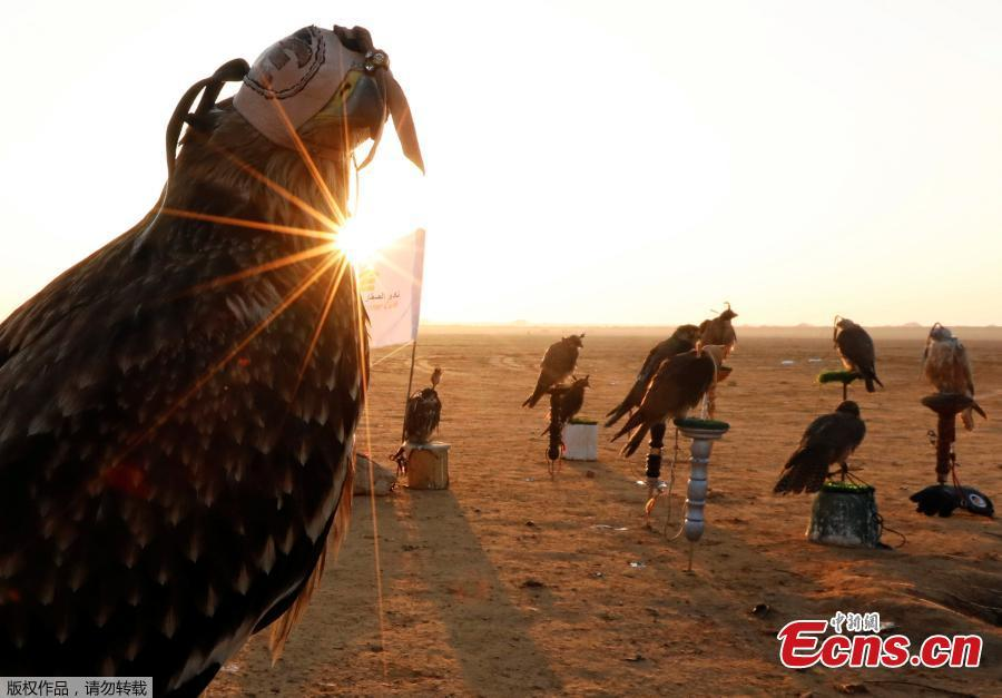Falconers of Egyptian clubs and austringers are seen during sunrise and celebration on World Falconry Day at Borg al-Arab desert in Alexandria, Egypt, November 17, 2018. (Photo/Agencies)