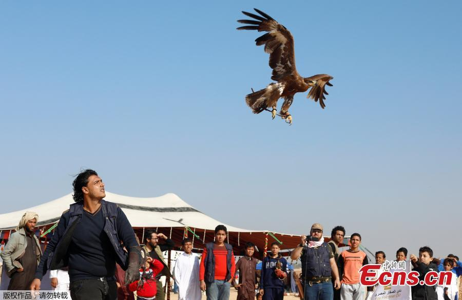 A member of EGY Falconer Club releases his falcon during a celebration by Egyptian clubs and austringers on World Falconry Day at Borg al-Arab desert in Alexandria, Egypt, November 17, 2018.  (Photo/Agencies)