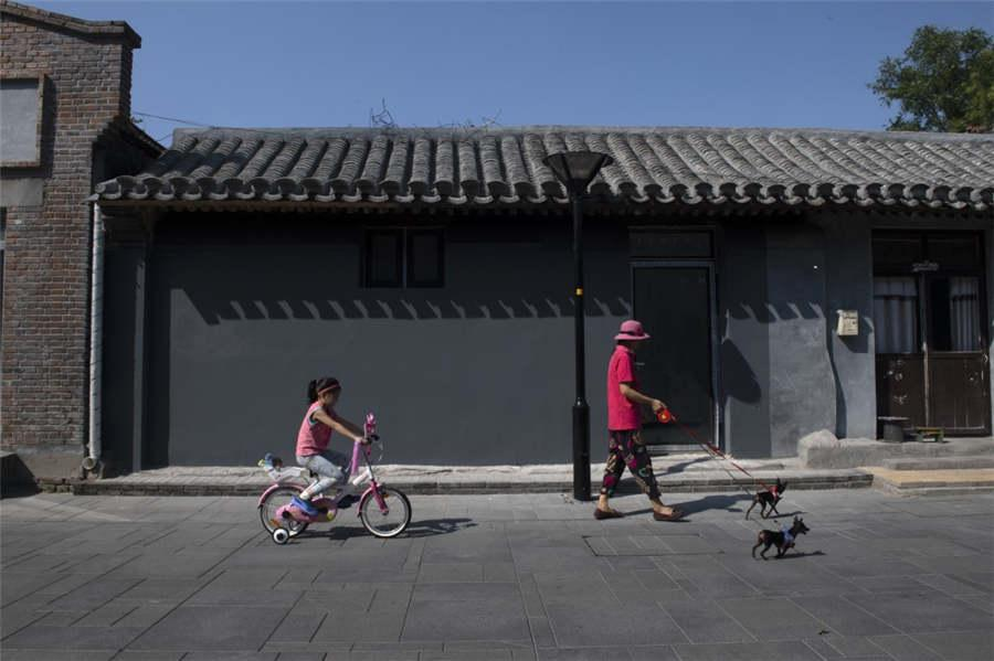 A child rides a bike and a woman walks two dogs on Damochang Hutong in Qianmen, Beijing, Sept 9, 2018. (Photo provided to chinadaily.com.cn)