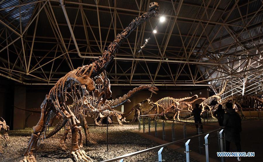 Tourists view dinosaur fossils at the World Dinosaur Valley in Lufeng County, southwest China\'s Yunnan Province, Dec. 23, 2017. The Lufeng World Dinosaur Valley, a dinosaur theme park, exhibited over 100 fossils of a variety of dinosaurs. China is slated to become world\'s largest theme park market by 2020, when the number of tourists is expected to exceed 230 million, according to a fresh report by U.S. engineering firm AECOM. The number of tourists to Chinese theme parks have seen an average annual growth oTourists view dinosaur fossils at the World Dinosaur Valley in Lufeng County, southwest China\'s Yunnan Province, Dec. 23, 2017. The Lufeng World Dinosaur Valley, a dinosaur theme park, exhibited over 100 fossils of a variety of dinosaurs. China is slated to become world\'s largest theme park market by 2020, when the number of tourists is expected to exceed 230 million, according to a fresh report by U.S. engineering firm AECOM. The number of tourists to Chinese theme parks have seen an average annual growth of 13 percent in the past decade, and reached 190 million in 2017. The number is expected to keep the double digit growth in the following years, according to the report. The report attributes the rapid growth to Chinese consumers\' rising income that sparks greater demands on leisure activities, as well as more convenient public transportation systems. (Xinhua/Lin Yiguang)f 13 percent in the past decade, and reached 190 million in 2017. The number is expected to keep the double digit growth in the following years, according to the report. The report attributes the rapid growth to Chinese consumers\' rising income that sparks greater demands on leisure activities, as well as more convenient public transportation systems. (Xinhua/Lin Yiguang)