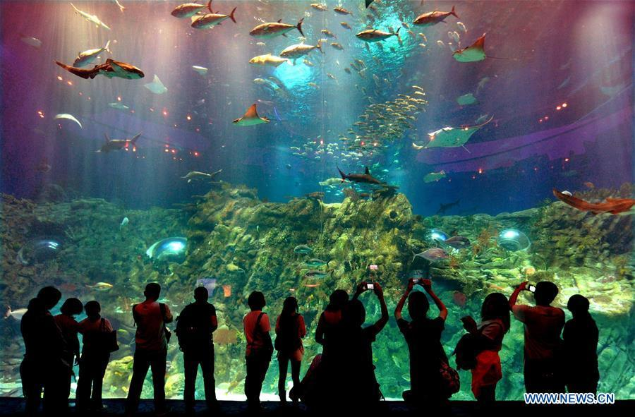 Tourists watch fish in the Ocean Park in Hong Kong, south China, May 29, 2012. China is slated to become world\'s largest theme park market by 2020, when the number of tourists is expected to exceed 230 million, according to a fresh report by U.S. engineering firm AECOM. The number of tourists to Chinese theme parks have seen an average annual growth of 13 percent in the past decade, and reached 190 million in 2017. The number is expected to keep the double digit growth in the following years, according to the report. The report attributes the rapid growth to Chinese consumers\' rising income that sparks greater demands on leisure activities, as well as more convenient public transportation systems. (Xinhua/Chen Xiaowei)