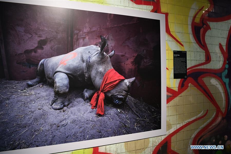 Photo taken on Nov. 19, 2018 shows a photograph exhibited at the World Press Photo Exhibition 2018 at Dupont Underground in Washington D.C., the United States. The exhibition, which is held from Oct. 27 to Nov. 25, showcases the winning photographs from the 61st annual World Press Photo contest, which received over 70,000 photographs taken by 4,548 photographers. (Xinhua/Liu Jie)