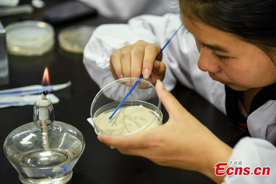 Patterns formed with bacteria are shown in petri dishes during a microbial art competition at China Pharmaceutical University in Nanjing, East China's Jiangsu province. Students of the school have created artworks by placing various strains of bacteria like staphylococcus and colibacillus into petri dishes, and letting the microbes react and spread across carefully drawn patterns.  (Photo: China News Service/ Jiang Chen)