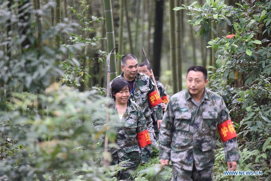 Forest rangers patrol in a bamboo forest at Hushi forestry farm in Chishui City, southwest China\'s Guizhou Province, Oct. 24, 2018. Chishui is famous for its bamboo forest. To guard the bamboo, forest rangers need to patrol for all year round. At the Hushi forestry farm, there is a patrol group consisting of a dozen of forest rangers. They are in charge of about an area of 2,400 hectares. Loneliness is one of the difficulties they need to face as they can only go back home after one-week work. But all of them stay to keep working after those years as they love the bamboo forest and are determined to guard it. (Xinhua/Huang Xiaoyong)