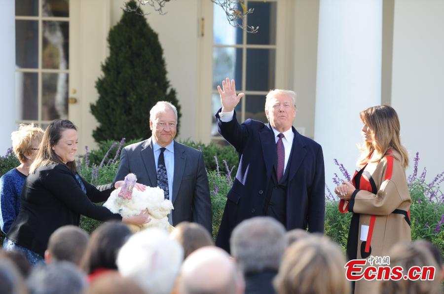 U.S. President Donald Trump (L3) participates in the National Thanksgiving Turkey Pardoning Ceremony at the Rose Garden of the White House in Washington D.C., the United States, on Nov. 20, 2018. (Photo: China News Service/ Chen Mengtong)