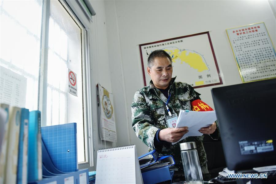 Forest ranger Li Yongfu reads materials at the office of Hushi forestry farm in Chishui City, southwest China\'s Guizhou Province, Oct. 24, 2018. Chishui is famous for its bamboo forest. To guard the bamboo, forest rangers need to patrol for all year round. At the Hushi forestry farm, there is a patrol group consisting of a dozen of forest rangers. They are in charge of about an area of 2,400 hectares. Loneliness is one of the difficulties they need to face as they can only go back home after one-week work. But all of them stay to keep working after those years as they love the bamboo forest and are determined to guard it. (Xinhua/Li Mangmang)