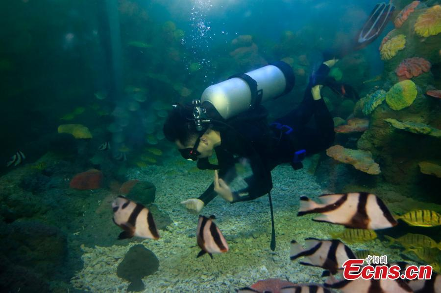 Different types of sea cucumbers are seen at a museum in Rongcheng, East China's Shandong province. The sea cucumber museum, first of this kind in China, features over 100 specimens of the marine animal. The special museum also serves as a center for visitors to know more about the animal and its ecological role in the marine environment. (Photo: China News Service/ Wang Fudong)
