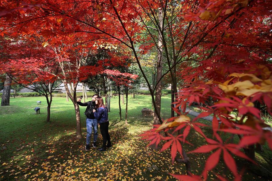 Tourists take selfie at a maple garden at Huanglongdong scenic spot in Zhangjiajie, central China\'s Hunan Province, Nov. 22, 2018. (Xinhua/Wu Yongbing)