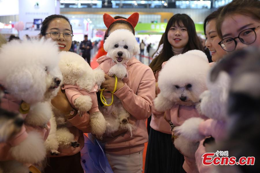Pet dog owners pose for a photo with their dogs at the 2108 China (Nanjing) Pet Culture Festival in Nanjing, Jiangsu Province, Nov. 24, 2018. A \