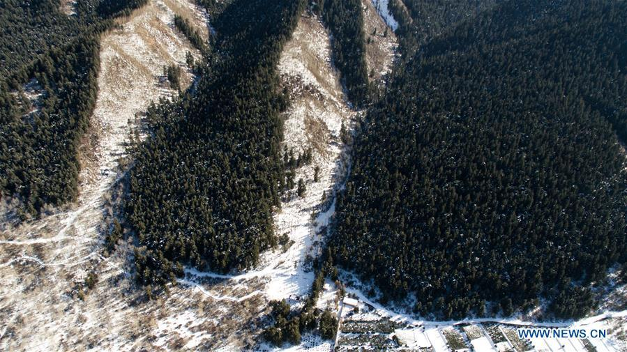 Aerial photo taken on Nov. 24, 2018 shows winter scenery in Xiaqunsi Forest Park of Ping\'an County, northwest China\'s Qinghai Province. (Xinhua/Wu Gang)