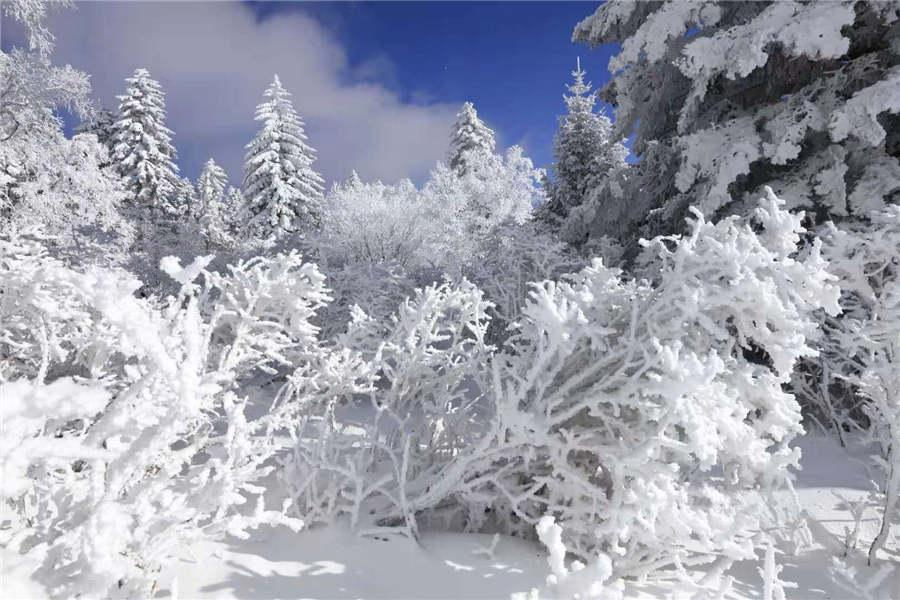 Snowfall has turned the Laoling mountain range into a winter wonderland. (Photo by An Zhenli for chinadaily.com.cn)