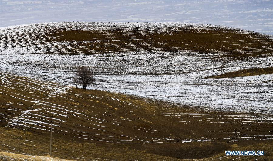 Photo taken on Nov. 22, 2018 shows snow-covered wheat field in Qitai County, northwest China\'s Xinjiang Uygur Autonomous Region. (Xinhua/Zhao Ge)