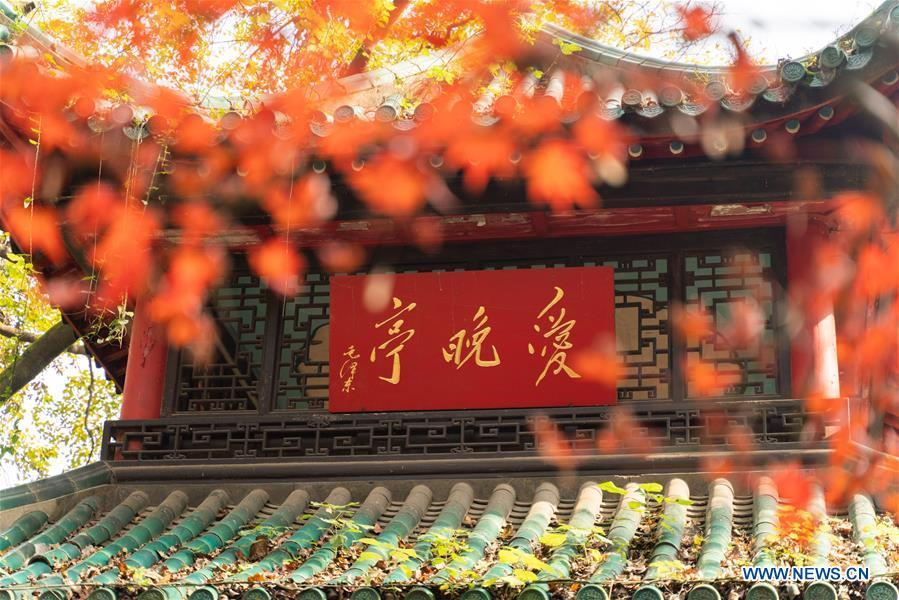 Photo taken on Nov. 25, 2018 shows the Aiwan pavilion of Yuelu Mountain in Changsha, central China\'s Hunan Province. (Xinhua/Zhang Xiaoyu)