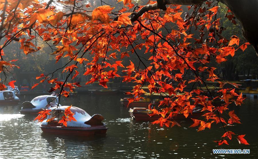 Tourists take sightseeing boats in Tianping Mountain scenic spot in Suzhou City, east China\'s Jiangsu Province, Nov. 27, 2018. (Xinhua/Hang Xingwei)