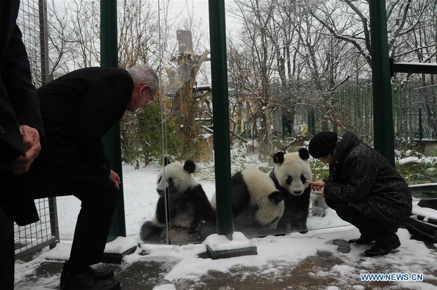 Austrian President Alexander Van der Bellen (L) looks at Giant panda Fu Feng, Fu Ban and their mother Yang Yang in the snow-covered Panda garden at Zoo Vienna in Vienna, Austria, on Dec. 1, 2018. Austrian President Alexander Van der Bellen visited the panda twins, Fu Feng and Fu Ban, at Zoo Vienna on Saturday to say goodbye as the pandas will return to Sichuan province, the hometown of giant pandas in China on Sunday. (Xinhua/Liu Xiang)
