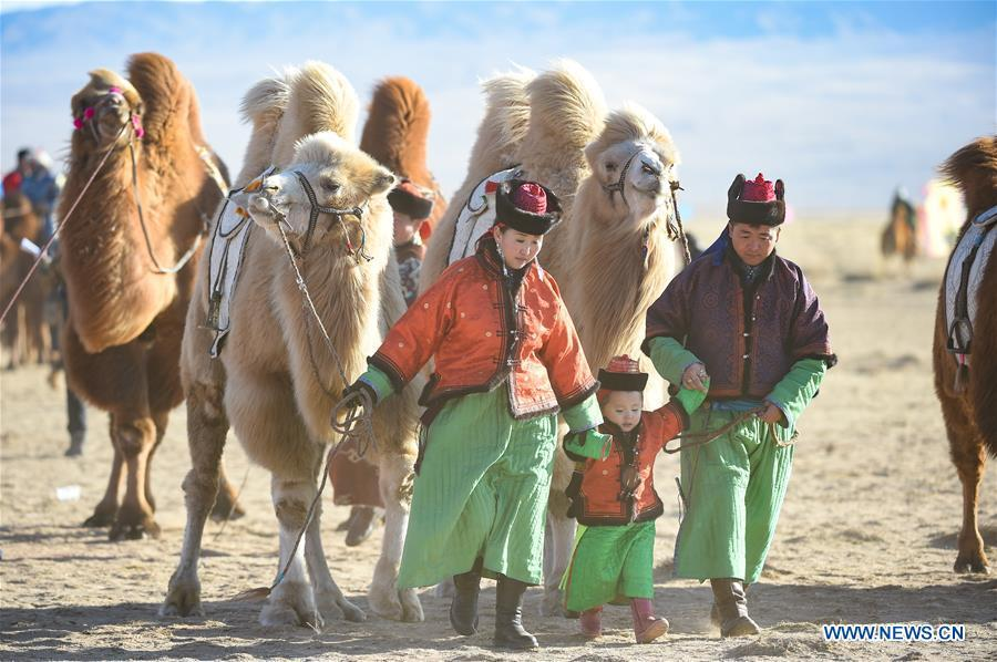 A family pull camels to take part in a beauty contest during an international camel cultural festival held in Wulatehou Banner, Bayan Nur of north China\'s Inner Mongolia Autonomous Region, Dec. 1, 2018. The three-day festival opened here on Saturday. (Xinhua/Yu Dongsheng)