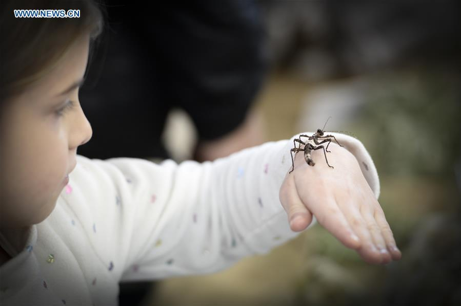 A child holds an insect on his hand at the Exotic Zoo in Warsaw, Poland on Dec. 2, 2018. The Exotic Zoo is a one-day event where people can see, touch and buy exotic reptiles, insects, amphibians and arthropods. The exhibition attracted hundreds of visitors on Sunday. (Xinhua/Jaap Arriens)