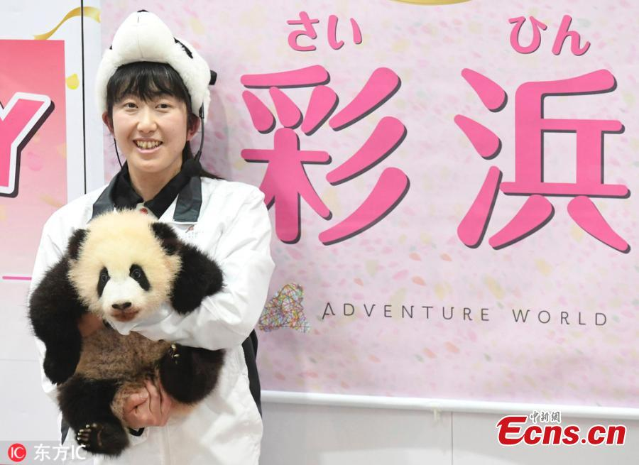 The name of a baby giant panda is announced as \