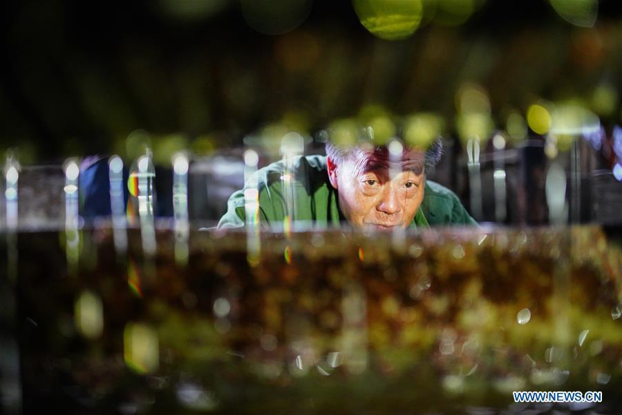 Villager Tan Han checks the extracted camellia oil, also known as tea seed oil, in Licha Village of Longsheng County, south China\'s Guangxi Zhuang Autonomous Region, Dec. 17, 2018. Camellia oil made with traditional methods by workshops in the village is quite popular in market because of its better quality and longer guarantee. (Xinhua/Huang Yongdan)