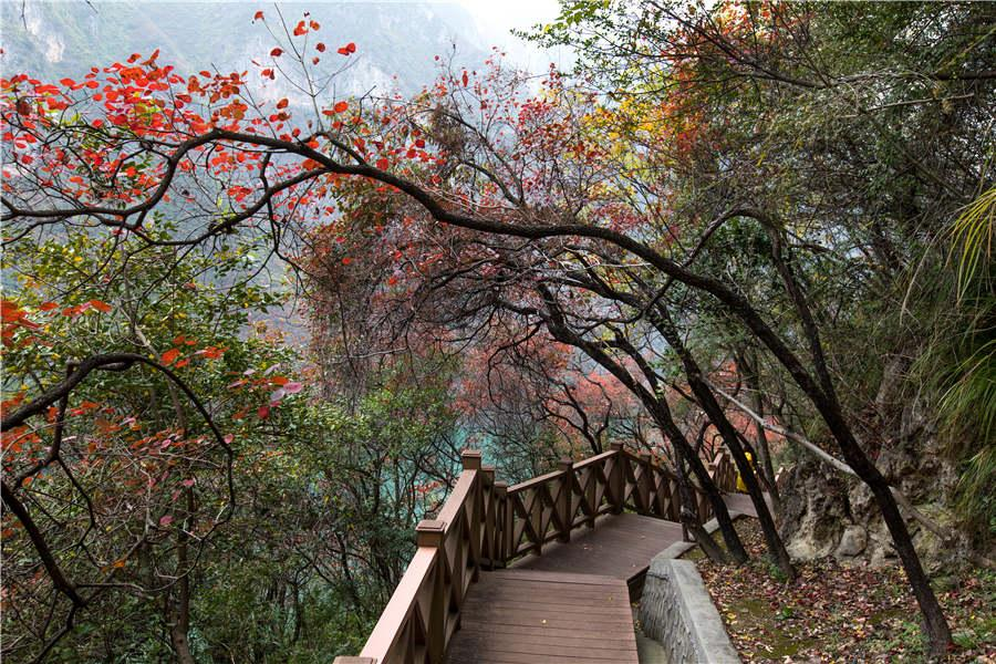 A section of the footpath at Wushan Mountain complements the beauty of the natural landscape. (Photo provided to chinadaily.com.cn)