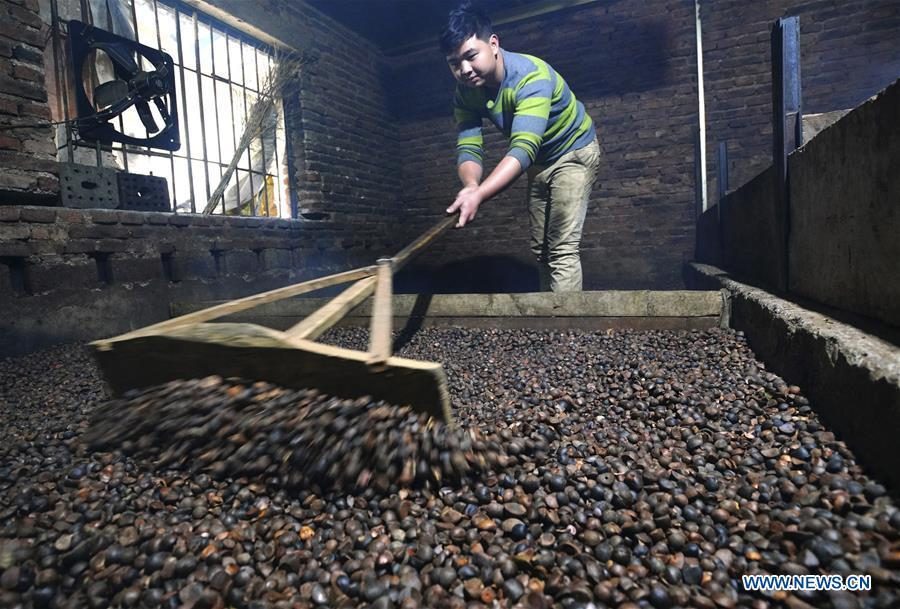 Villager Yang Liangfu dries camellia seeds for oil extraction in Licha Village of Longsheng County, south China\'s Guangxi Zhuang Autonomous Region, Dec. 17, 2018. Camellia oil made with traditional methods by workshops in the village is quite popular in market because of its better quality and longer guarantee. (Xinhua/Huang Yongdan)