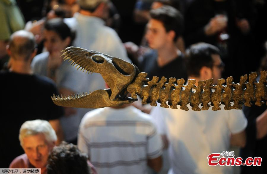 Visitors admire replica of a 65-million-year-old skeleton of a plesiosaur marine reptile at the Bernardino Rivadavia Natural Science Museum in Buenos Aires, Argentina, on Dec. 19, 2018. The fossil is found in Cretaceous period rocks submerged in Lake Argentino at the foot of the Andes mountains. The fossil is nine meters long with each fin measuring 1.3 meters. (Photo/Agencies)
