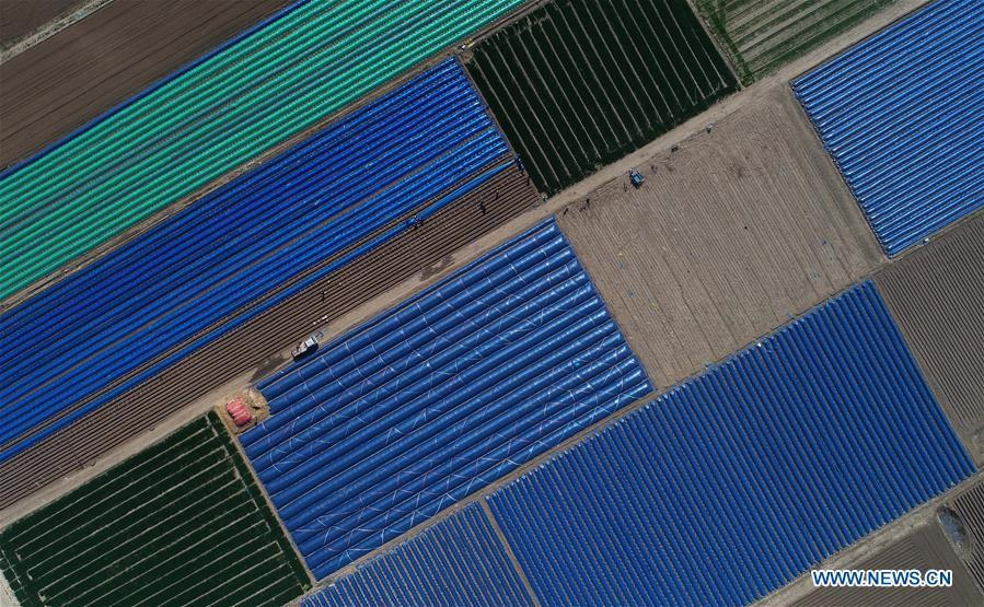 Aerial photo taken on April 20, 2018 shows the farmland of gingers covered with plastic mulch at Xinjuntun Village of Tangshan City, north China\'s Hebei Province. Colors make our world bright and beautiful. In 2018, Xinhua photographers across China explored views from the sky with drones. Here are these drone photos with amazing colors. (Xinhua/Yang Shiyao)
