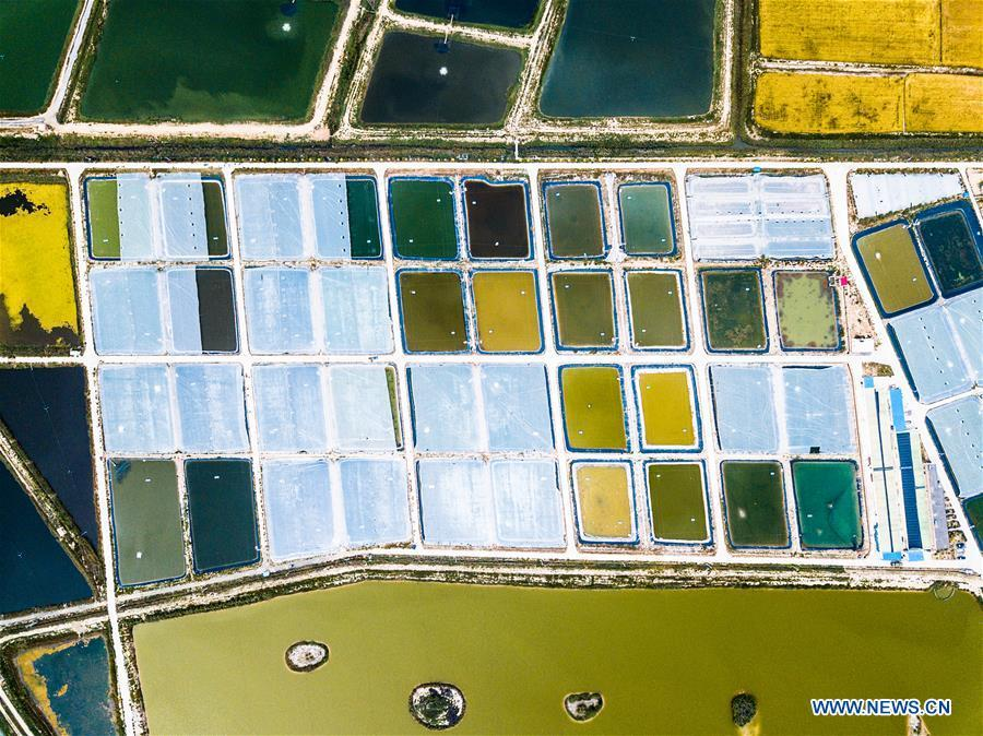 Aerial photo taken on Sept. 11, 2018 shows a prawn cultivation base in Helan County, northwest China\'s Ningxia Hui Autonomous Region. Colors make our world bright and beautiful. In 2018, Xinhua photographers across China explored views from the sky with drones. Here are these drone photos with amazing colors. (Xinhua/Wang Jianhua)
