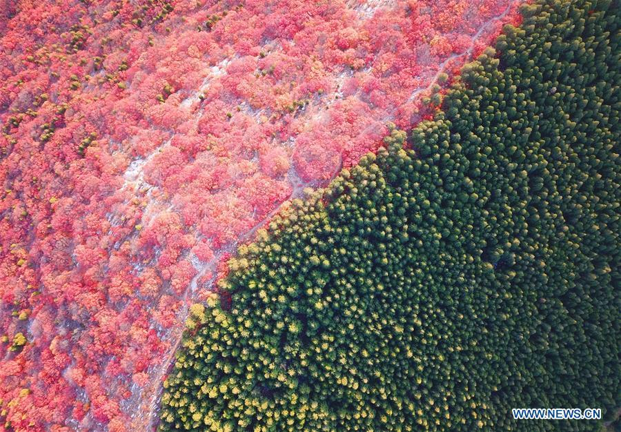 Aerial photo taken on Oct. 31, 2018 shows the scenery of Xiezi Mountain in Jinan, capital city of east China\'s Shandong Province. Colors make our world bright and beautiful. In 2018, Xinhua photographers across China explored views from the sky with drones. Here are these drone photos with amazing colors. (Xinhua/Zhu Zheng)