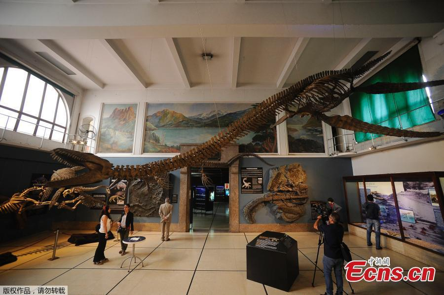 Replica of a 65-million-year-old skeleton of a plesiosaur marine reptile is displayed in the museum hall at the Bernardino Rivadavia Natural Science Museum in Buenos Aires, Argentina, on Dec. 19, 2018. The fossil is found in Cretaceous period rocks submerged in Lake Argentino at the foot of the Andes mountains. The fossil is nine meters long with each fin measuring 1.3 meters. (Photo/Agencies)
