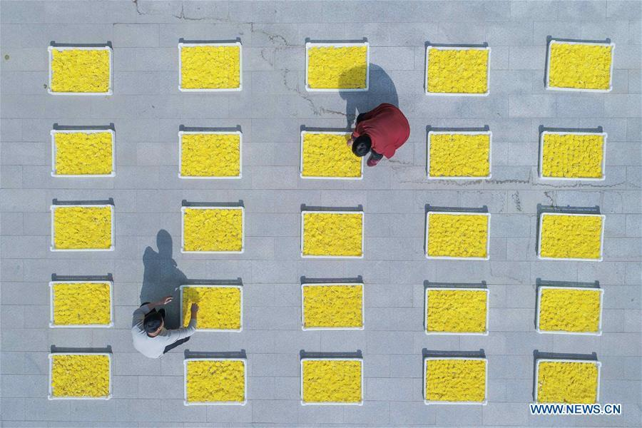 Farmers air chrysanthemum flowers in Weicheng Town of Weixian County, north China\'s Hebei Province, Nov. 7, 2018. Colors make our world bright and beautiful. In 2018, Xinhua photographers across China explored views from the sky with drones. Here are these drone photos with amazing colors. (Xinhua/Zhu Xudong)