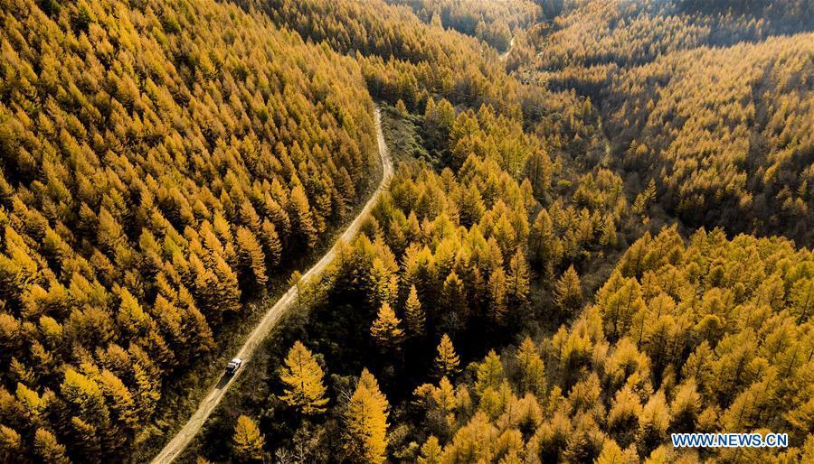 Aerial photo taken on Oct. 8, 2018 shows the autumn scenery of the Haodifang forest farm in Qinyuan County, north China\'s Shanxi Province. Colors make our world bright and beautiful. In 2018, Xinhua photographers across China explored views from the sky with drones. Here are these drone photos with amazing colors. (Xinhua/Tao Ming)