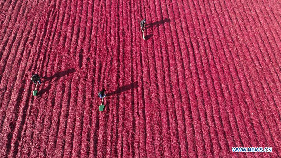 Aerial photo taken on Dec. 4, 2018 shows farmers drying chilli peppers at Huanglin Village of Liangjiadian Township in Yutian County of Tangshan City, north China\'s Hebei Province. Colors make our world bright and beautiful. In 2018, Xinhua photographers across China explored views from the sky with drones. Here are these drone photos with amazing colors. (Xinhua/Liu Mancang)