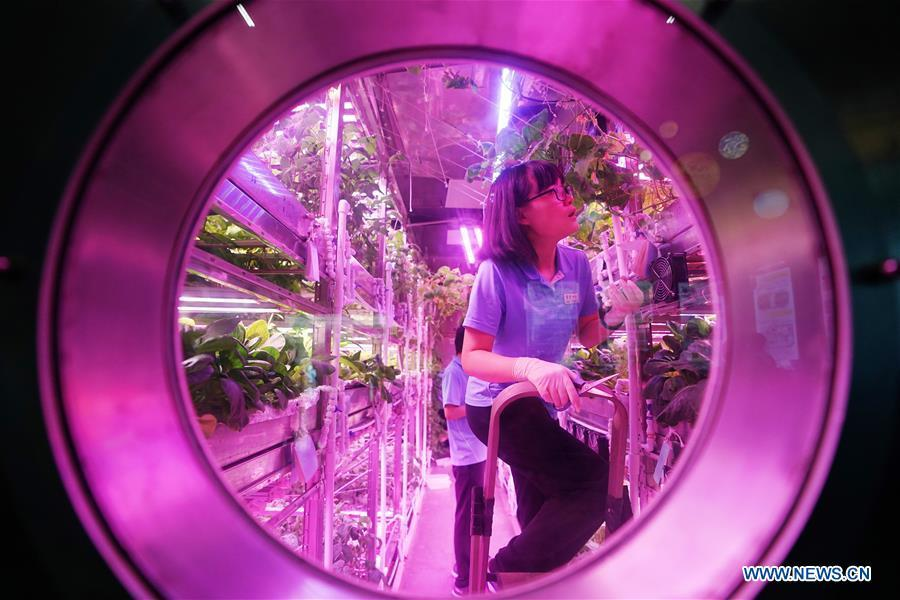 Volunteer Liu Hui (front) collects vegetables in the Yuegong-1, or Lunar Palace 1, at Beihang University in Beijing, capital of China, May 15, 2018. The living and working scenes of Chinese people in the past year have created a series of amazing views, some of which formed geometric figures. Those photos tell the development and progress of the country in 2018. (Xinhua/Ju Huanzong)