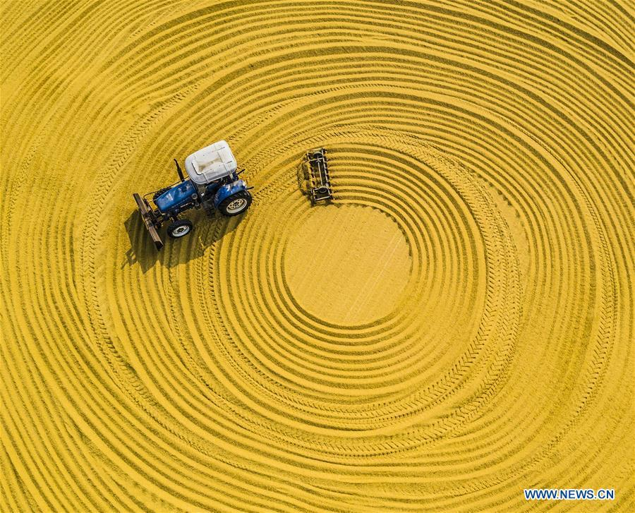 A farming machine dries unhusked rice in the sun at a farm in Sihong, east China\'s Jiangsu Province, Oct. 23, 2018. The living and working scenes of Chinese people in the past year have created a series of amazing views, some of which formed geometric figures. Those photos tell the development and progress of the country in 2018. (Xinhua/Zhang Lianhua)