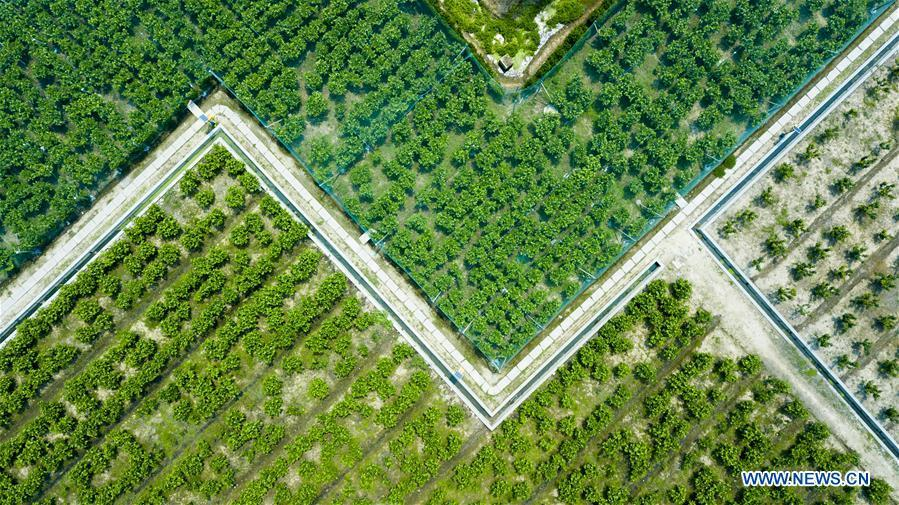Photo taken on April 27, 2018 shows an aerial view of a garden in the Heping community center of Binhu District in Wuxi City, east China\'s Jiangsu Province. The living and working scenes of Chinese people in the past year have created a series of amazing views, some of which formed geometric figures. Those photos tell the development and progress of the country in 2018. (Xinhua/Shen Bohan)