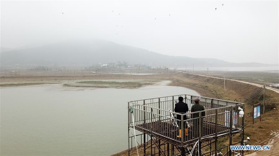 Aerial photo taken on Dec. 22, 2018 shows Wang Sanyi (L) observing migrant birds in Caizi Lake wetland, Anqing, in east China\'s Anhui Province. Wang Sanyi, 69, founded the Caizi Lake wetland ecological protection association with more than 300 members in 2010. Some villagers who used to be hunters now join the association, becoming volunteers to protect migrant birds. With the help of the association, the ecological environment of Caizi Lake wetland has been improved in recent years. Thanks to the efforts of protection, more and more migrant birds are seen here overwintering. \