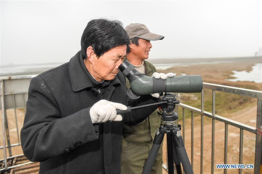 Wang Sanyi observes migrant birds in Caizi Lake wetland, Anqing, in east China\'s Anhui Province, Dec. 22, 2018. Wang Sanyi, 69, founded the Caizi Lake wetland ecological protection association with more than 300 members in 2010. Some villagers who used to be hunters now join the association, becoming volunteers to protect migrant birds. With the help of the association, the ecological environment of Caizi Lake wetland has been improved in recent years. Thanks to the efforts of protection, more and more migrant birds are seen here overwintering. \