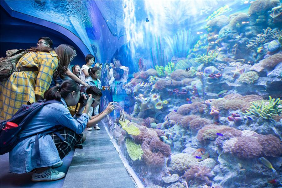 The Shanghai Haichang Ocean Park features five theme zones, three animal theaters, two high-tech cinemas and an ocean-themed resort hotel. (Photo provided to chinadaily.com.cn)