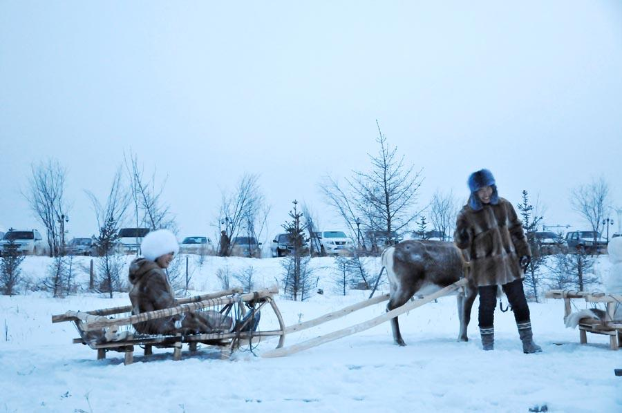 The Aoluguya is the only tribe in China to still breed reindeer. (Photo/China Daily)