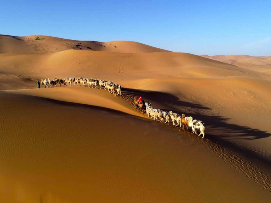 Thousands of camels are seen Wednesday in Alxa League of North China\'s Inner Mongolia autonomous region for the second Alxa Camel Culture Tourism Festival. (Photo by Cheng Lin/ for chinadaily.com.cn)  Thousands of camels gathered in Alxa League of North China\'s Inner Mongolia autonomous region on Wednesday for the second Alxa Camel Culture Tourism Festival, which will last until Saturday.  Known as the Home of Chinese Camels, Alxa League has two-thirds of the animals in China.  The opening ceremony of the festival was held on Thursday.