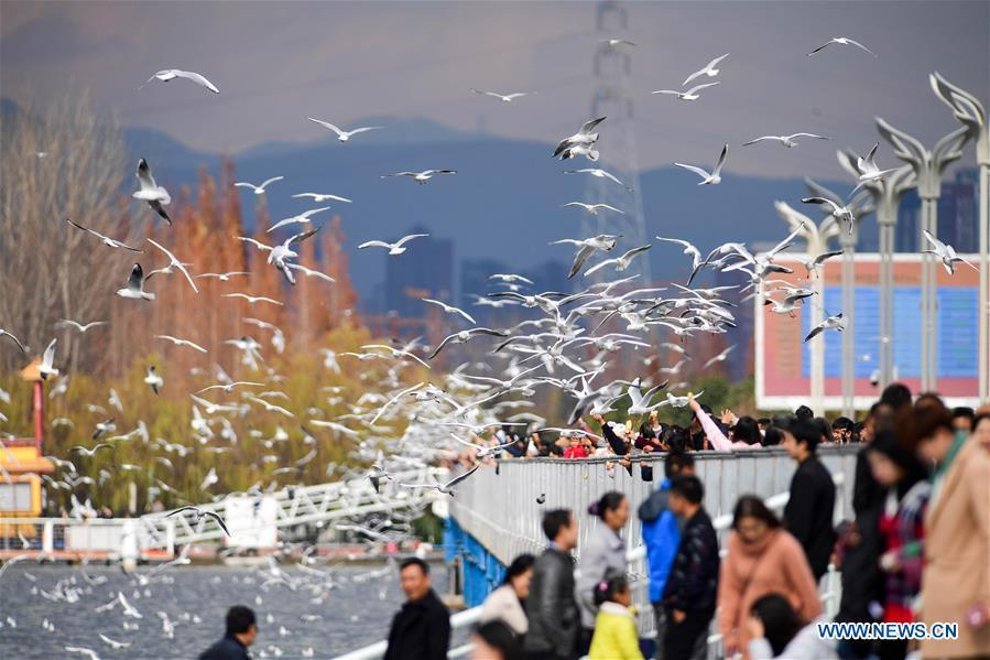 Tourists view black-headed gulls at Haigeng dam in Kunming, capital of southwest China\'s Yunnan Province, Jan. 1, 2019. Migratory black-headed gulls became an attraction for tourists during the New Year holiday. (Xinhua/Hu Chao)