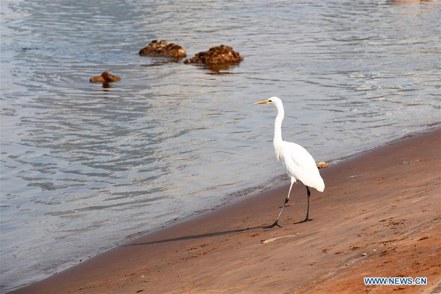 A water bird rests on the bank of the Yellow River in Lanzhou, capital of northwest China\'s Gansu Province, Jan. 2, 2019. With the improvement of environment on the upper reaches of the Yellow River, more water birds come to winter here in Lanzhou. (Xinhua/Fan Peishen)