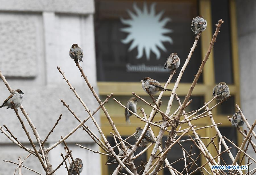 Birds perch on a tree in front of the Smithsonian National Museum of Natural History in Washington D.C., the United States, on Jan. 2, 2019. The 19 Smithsonian museums and the National Zoo in Washington D.C. closed their doors on Wednesday as the partial U.S. government shutdown dragged on. (Xinhua/Liu Jie)