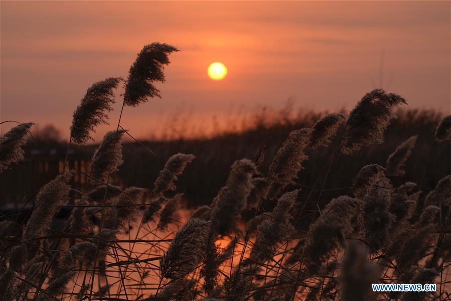 Photo taken on Dec. 6, 2018 shows the sunrise in Baiyangdian of Anxin County, Xiongan New Area, north China\'s Hebei Province. China\'s central authorities have approved the 2018-2035 master plan for Xiongan New Area, stressing that its creation is significant to high-quality development and the building of the modern economic system. The plan was approved by the Central Committee of the Communist Party of China (CPC) and the State Council. The master plan is the fundamental guideline for the development, construction and management of the Xiongan New Area and should be strictly implemented, according to the approval released on Wednesday. The plan also lists overall development goals for the new area. By 2035, Xiongan will basically develop into a modern city that is green, intelligent and livable, with relatively strong competitiveness and harmonious human-environment interaction. (Xinhua/Xing Guangli)